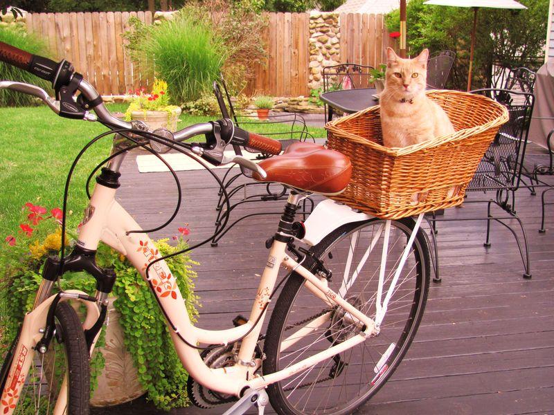 Bike Blog_photos_7-31-2010 III
